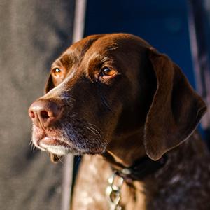 Ella Dog Headshot